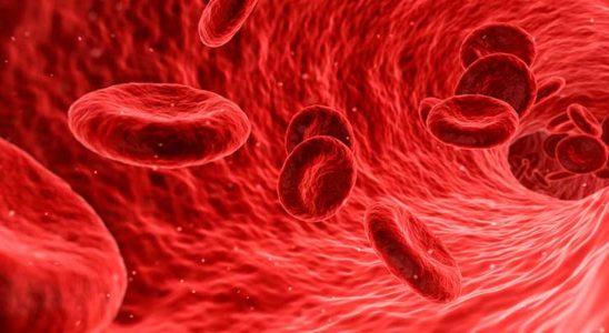 plaquetas-plasma-sangre-sintron